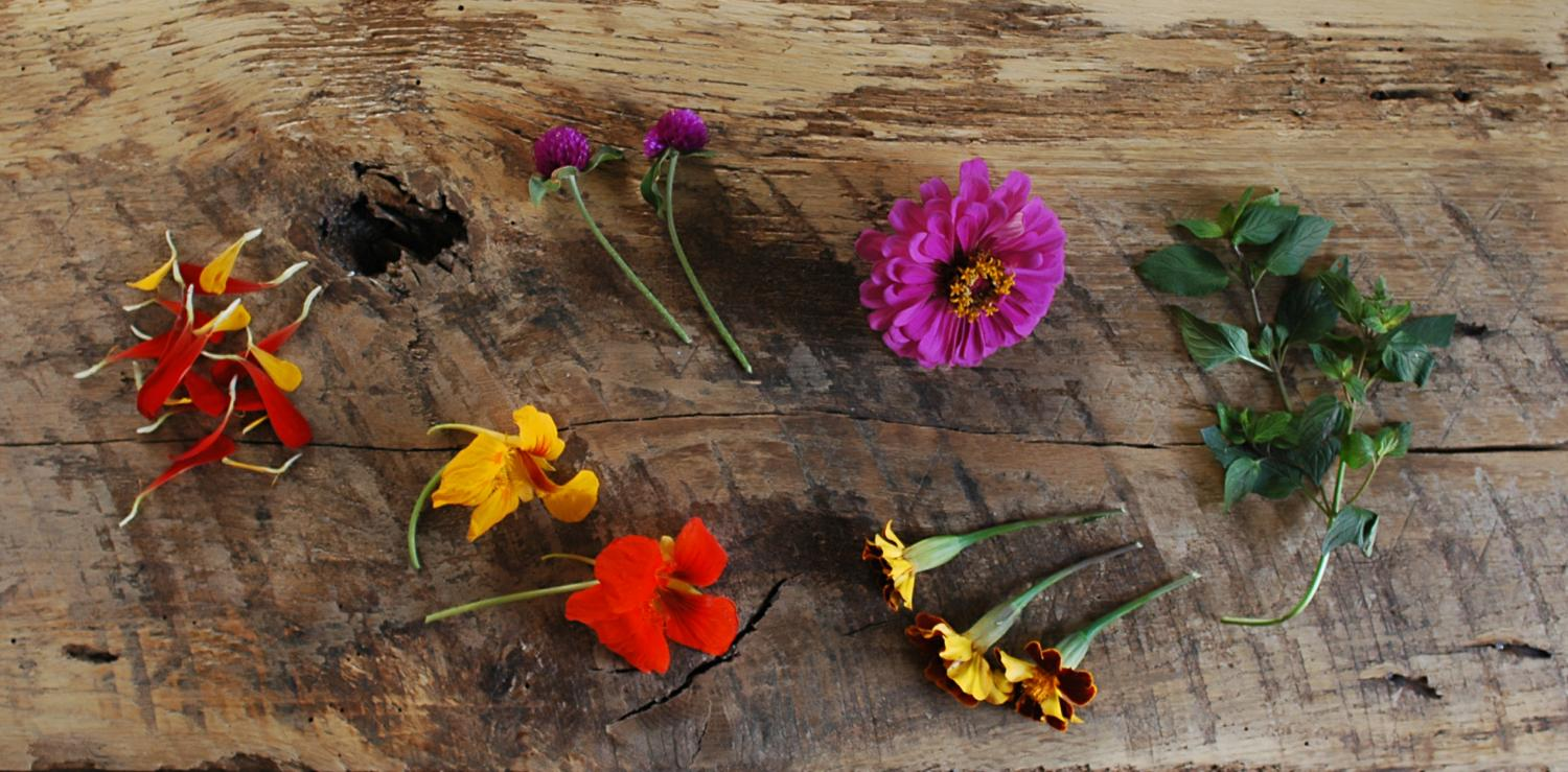 Zinnia petals, Clover, Nasturtium, Chocolate Mint, (are all featured in this photo)   Also available: Roses, Violets, Marigolds, Lemon and Pineapple Mint.  All edible flowers and herbs are seasonal)